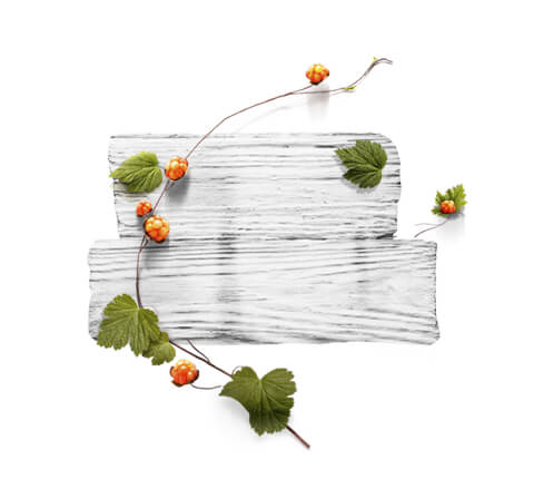 barnangen_com_swedish_inspired_ingredients_cloudberry_v2_480x430